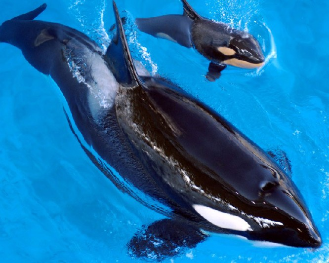 Foto von SeaWorld Orlando, Florida